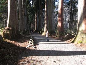 門を過ぎてからの杉並木がまた、長い…
