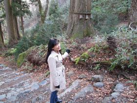 杉並木が石段に変わって…