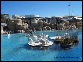 El hábitat de las aves acuáticas como los pelicanos del  Oceanográfico de Valencia (Comunidad Valenciana)