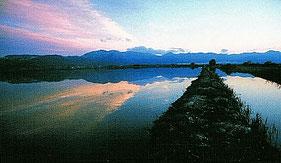 Camino entre las balsas del arroz de la marjal de Pego y Oliva en la Comunidad Valenciana.
