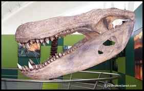 Dinosaurio Rex del Museo Príncipe Felipe de Valencia, Comunidad Valenciana (España)