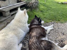 Zwei beste Freunde (Blizzi 11 und Merkur 17 jährig im Nov.)