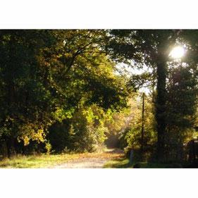 Ferien und reiten im Jagdschloss Friedrichsmoor