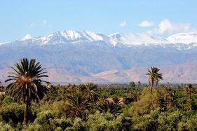 palmeraie et oasis