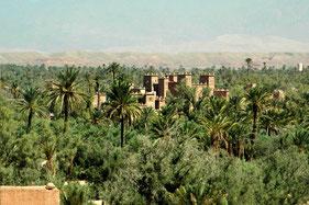 Palmeraie et oasis au sud Maroc