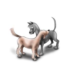 Hundesprache vertiefen durch Beobachtung
