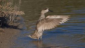 Fauna  del Parque Natural del Fondo,Alicante, Comunidad Valenciana.