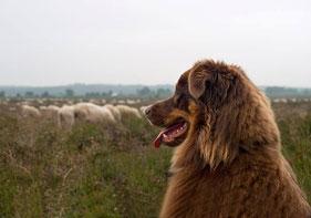 Donya bij de schapen- Lia Brinkman Fotografie