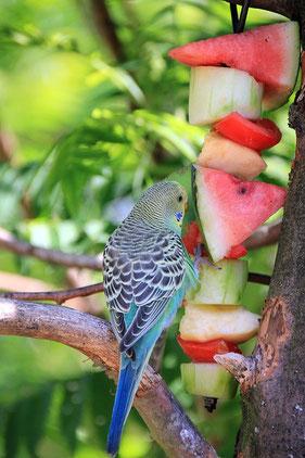 Vogel mit Obst