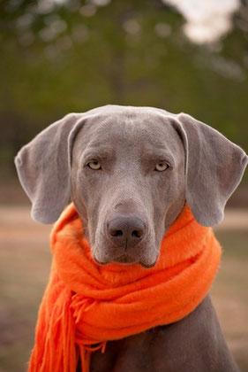 Hund mit Schal