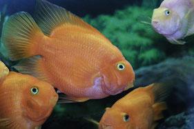 Fische,Aquarium