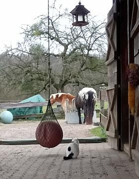 Paula bei den Pferden am Stall