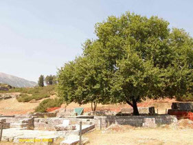 Sacred house of Dodona