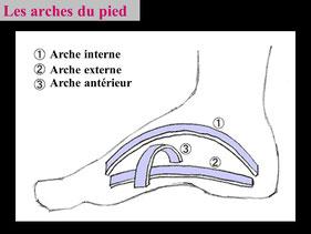 Structure du pied podologue paris