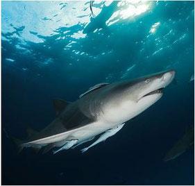 Foto (c) Shark Project