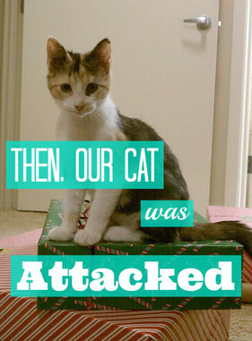 Then, our cat was attacked