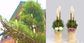 上鷺宮区民センターの花だより