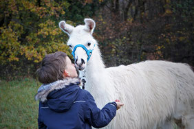 Kindergeburtstag mit Lamas, Kindergeburtstag, Lama mit Kind, Lamawanderung, LAMA MAMA, Sommerein, Niederösterreich
