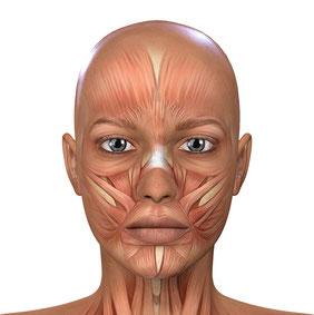 Perfekte Kenntnisse der Gesichtsanatomie sind für eine Behandlung mit Botox notwendig