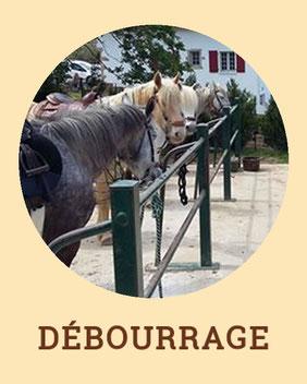 Débourrage - Centre de Tourisme Equestre Larrun Alde
