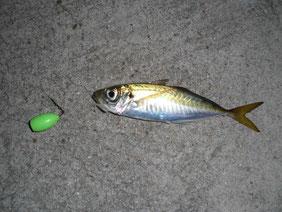 アジ・アジングの釣り場 長門市