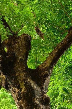 生命力溢れる大木