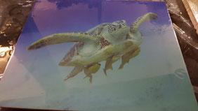 Hier haben wir ein Bild von einer Schildkröte, die der Kunde selber in den Ferien Fotografiert hat, auf Folie drucken lassen,dann aufgezogen und zum Schutz versiegelt. Man kann so wunderschöne Decorböden herstellen.