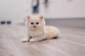 Katze alleine