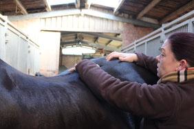 Abtasten des pferdkörpers
