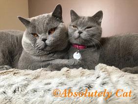 Photo d' Astuce & Betty - Heureux parents