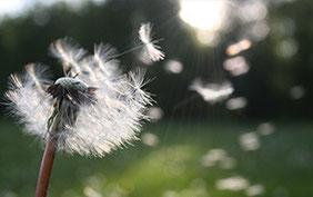 Asche in Wind Bestattung
