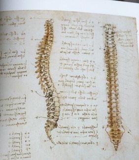 「レオナルド・ダ・ヴィンチ 人体解剖図を読み解く」前橋重二著より