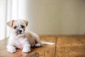 床材選びが愛犬の将来の疾患を決める