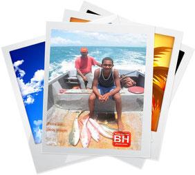 Fotos de la fauna marina de BH