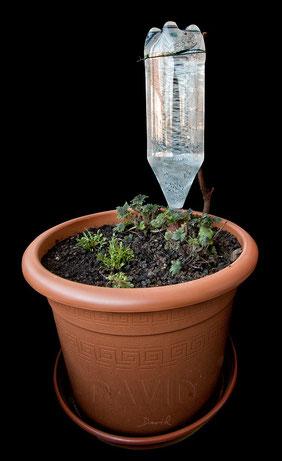 Tonkegel Bewässerung bewässerung für gießfaule wildbienenschutz im naturgarten