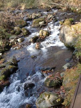 「川の湯」を流れる渓流