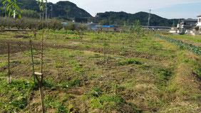 扁桃線【A20】 2016.11.23時点 和×夢 nagomu farm