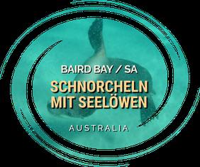 Baird Bay,SA,South Australia,Australia,Australien,Schnorcheln,Sealions.Sealion,Seelöse,Seelöwen