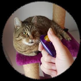 Clickertraining Katze, Tiertraining, Verhaltenstraining, Erziehungstraining, Tiertrainer Katze, Problemkatze