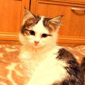 Sunny Katze