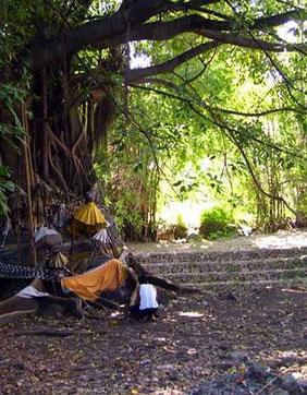 geschmückter Baum mit Tempelschirmen