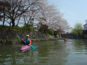 近江八幡市の水郷を漕ぐ