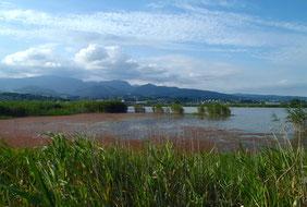 赤い浮草に覆われた干陸地内のため池