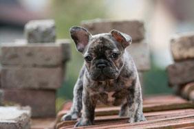 Die Treue Eines Hundes Ist Ein Kostbares Geschenk Das Nicht Minder