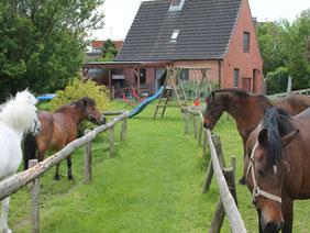 Bauernhof-Boie,  unsere Ponys begrüßen sie, wenn sie vom Ferienhaus zum Bauernhof möchten.