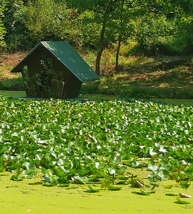 Relax nature peace Bulgaria beautiful lake landscape