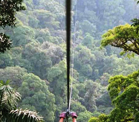 Canopy tours Dominical