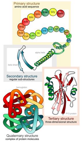 wie viel Protein braucht der Körper?