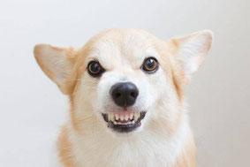 Comment bien comprendre l'agressivité du chien