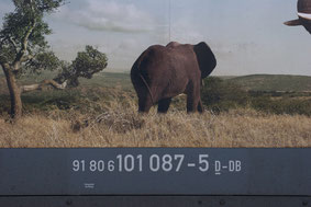 "BR 101 087-5 ""Packendes Südafrika!"" - Elefanten"